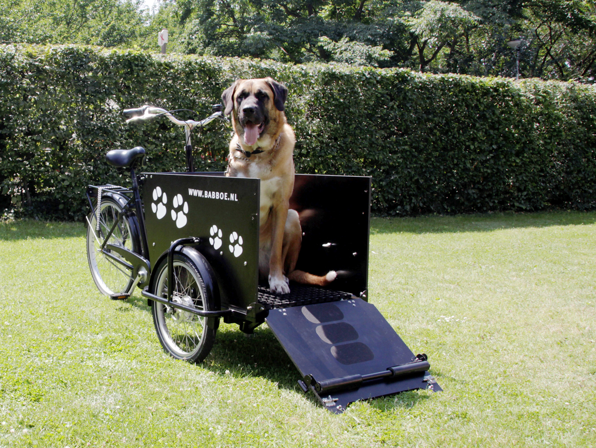 babboe dog e lastenrad f r hunde versandkostenfrei kaufen. Black Bedroom Furniture Sets. Home Design Ideas